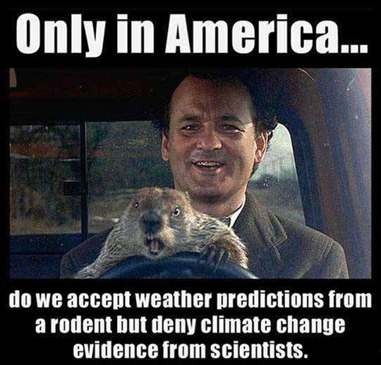 cool-bill-murray-groundhog-weather