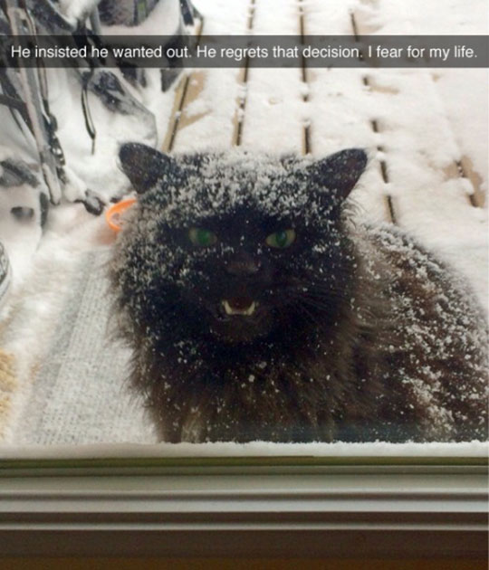 cool-angry-cat-snow-outside