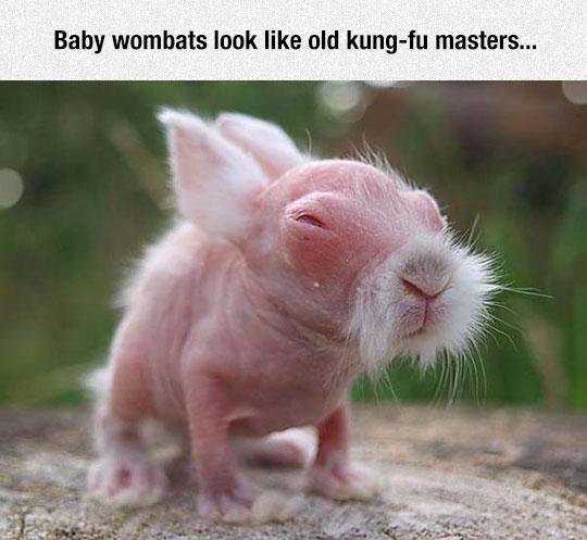 cool-baby-wombat-beard-skin