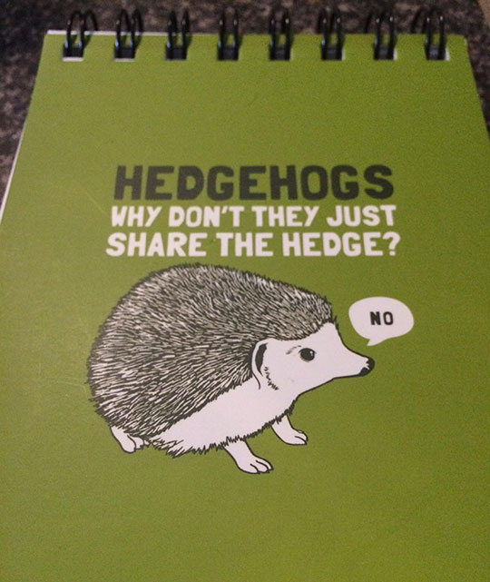 cool-cartoon-notebook-hedgehog