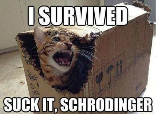 cool-cat-box-yelling-schrodinger