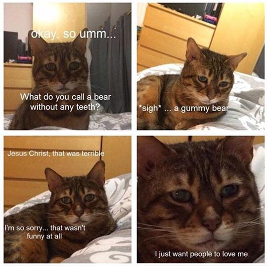 cool-cat-pun-terrible-shame