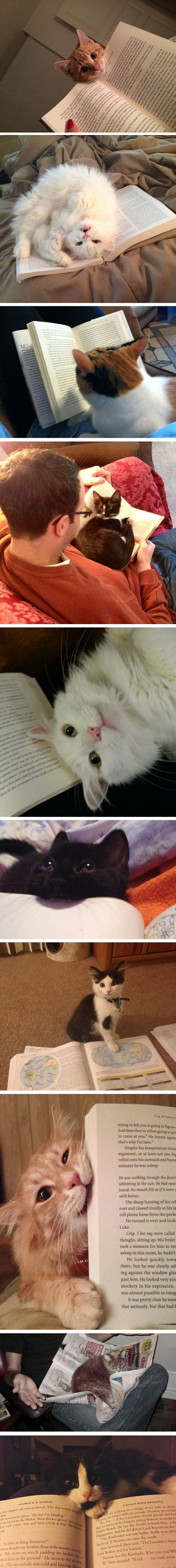 cool-cat-reading-book-annoying