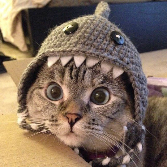 cool-cat-shark-hat-big-eyes