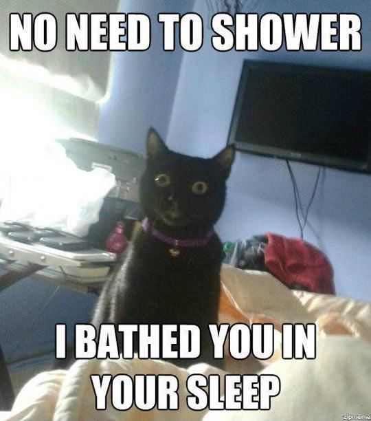 cool-cat-shower-sleep-creepy