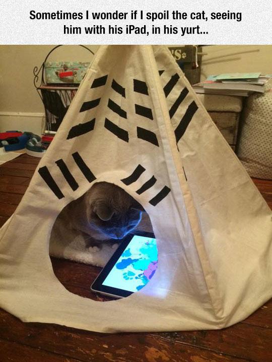 cool-cat-yurt-ipad-watching