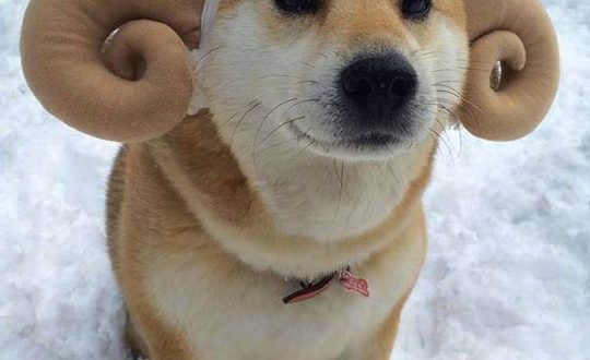 cool-dog-antlers-hat-snow