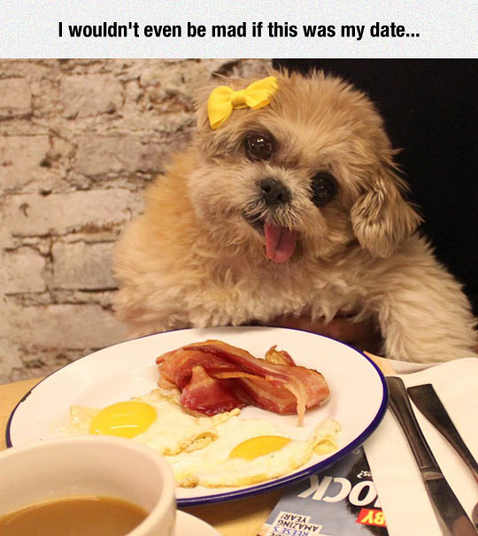 cool-dog-date-egg-bar-bacon