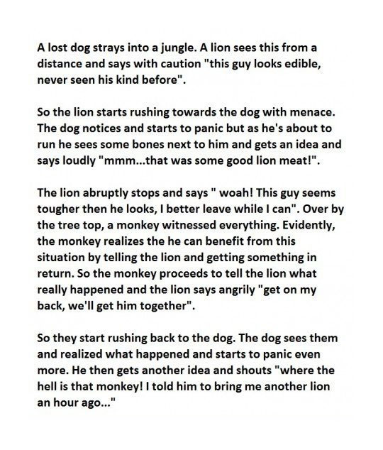 cool-dog-jungle-story-monkey