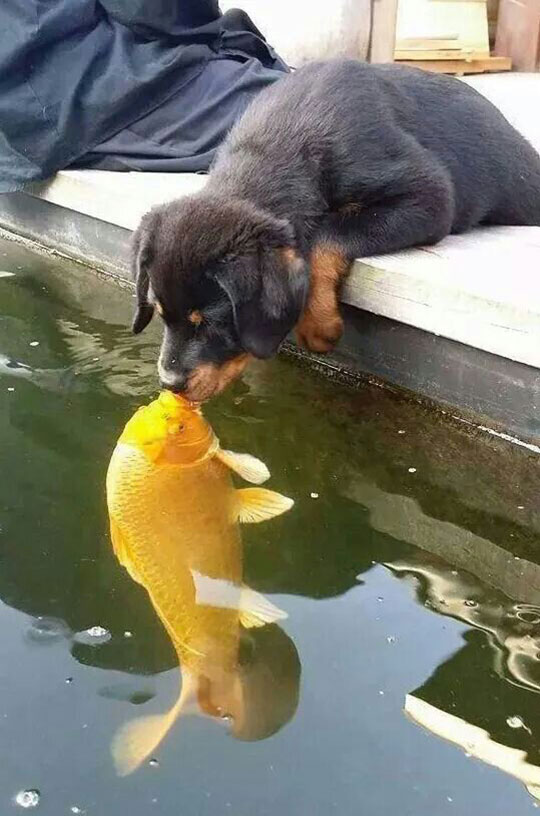 cool-dog-kissing-fish-water
