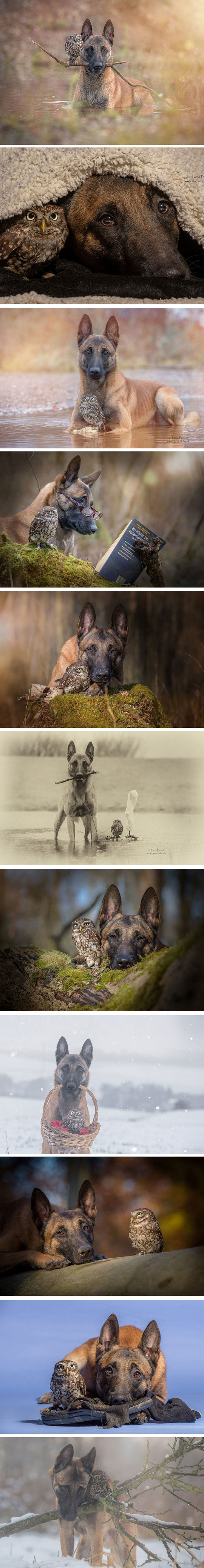 cool-dog-owl-friendship-forest