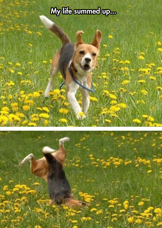 cool-dog-running-falling-green-field