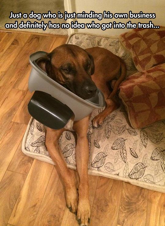 cool-dog-trash-can-stuck