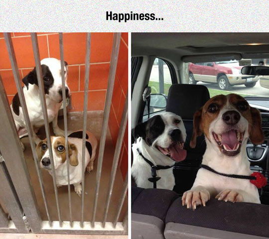 cool-dogs-shelter-adoption-car