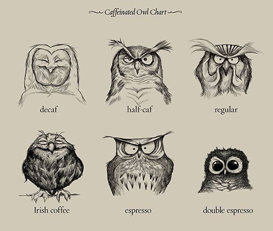 cool-drawing-owl-coffee-emotions