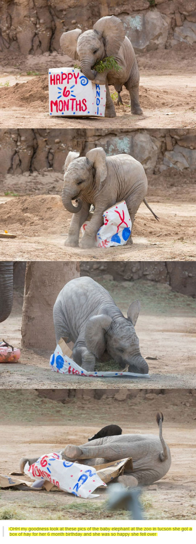 cool-elephant-box-birthday-present