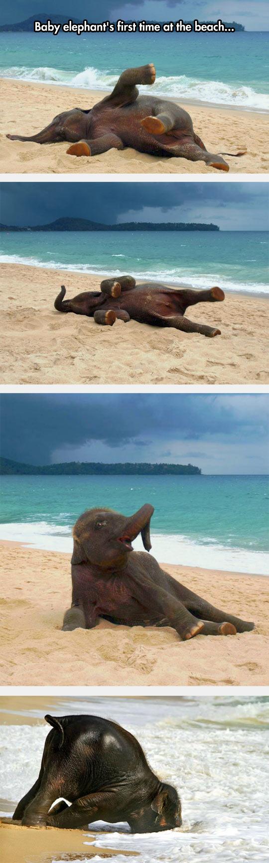 cool-elephant-first-time-beach-sand