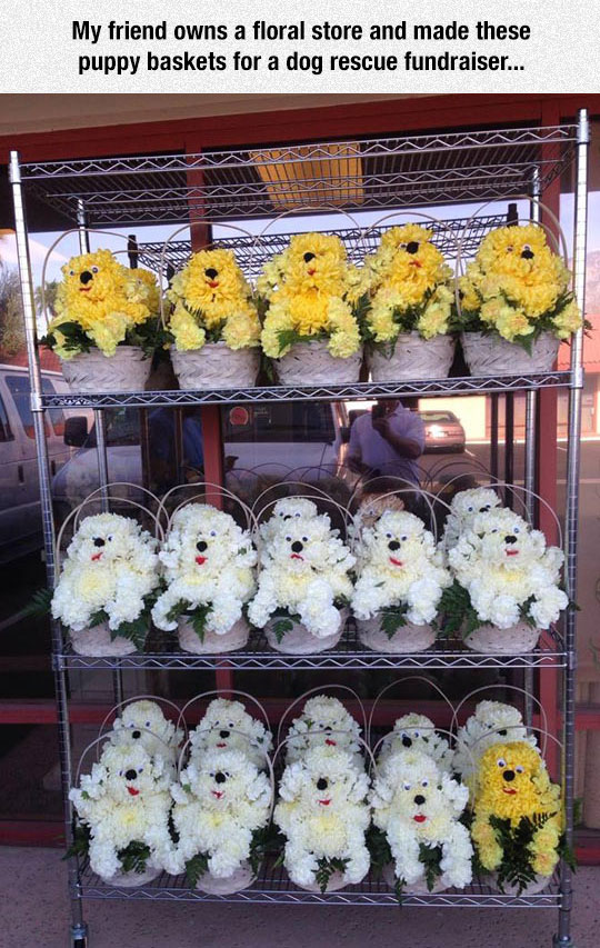 cool-floral-store-puppy-baskets