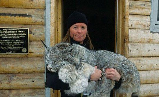cool-girl-lynx-giant-cabin