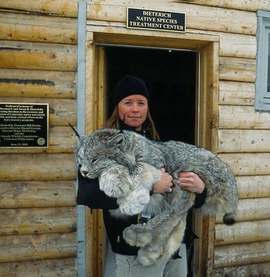 cool-girl-lynx-giant-cabin