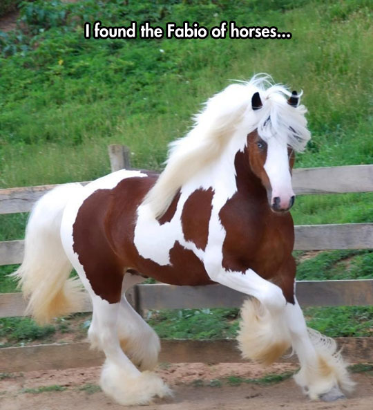 cool-horse-hair-blonde