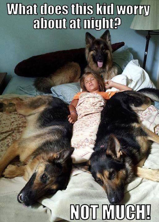 cool-kid-sleeping-bed-dogs