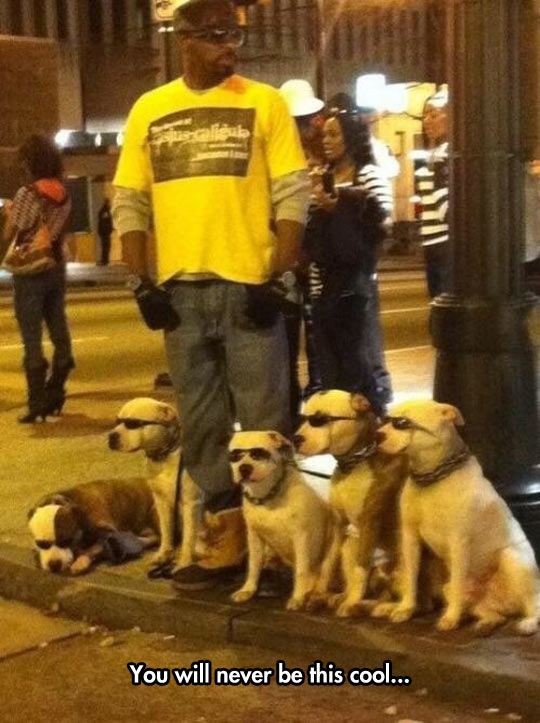 cool-man-street-walking-dogs-glasses