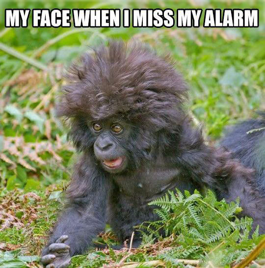 cool-monkey-hair-alarm-snooze
