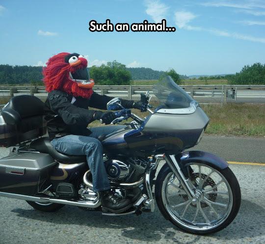 cool-puppet-motorbike-road-helmet
