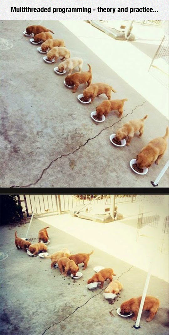 cool-puppies-feeding-multithreaded-mess