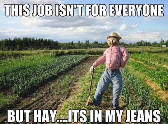 cool-scarecrow-jeans-fields-plantations
