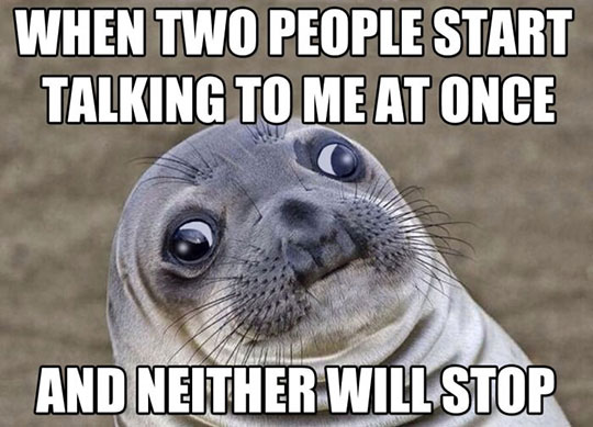 cool-seal-eyes-people-talking
