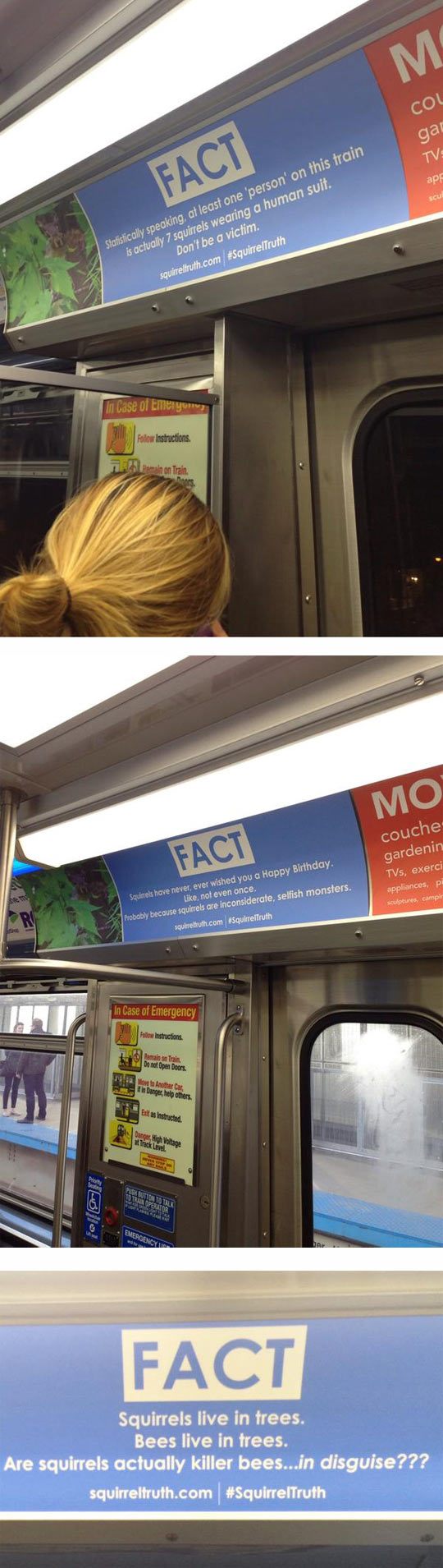 cool-squirrel-fact-subway-jokes