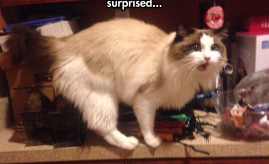 cool-strange-cat-home-surprise