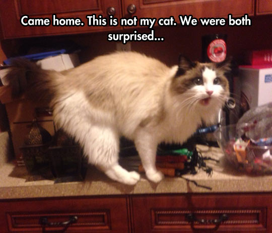 cool-strange-cat-home-surprise