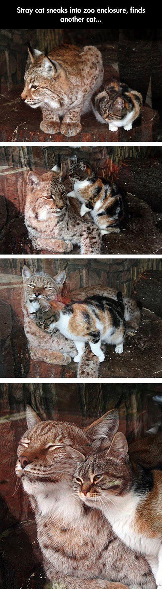 cool-stray-cat-zoo-ocelot