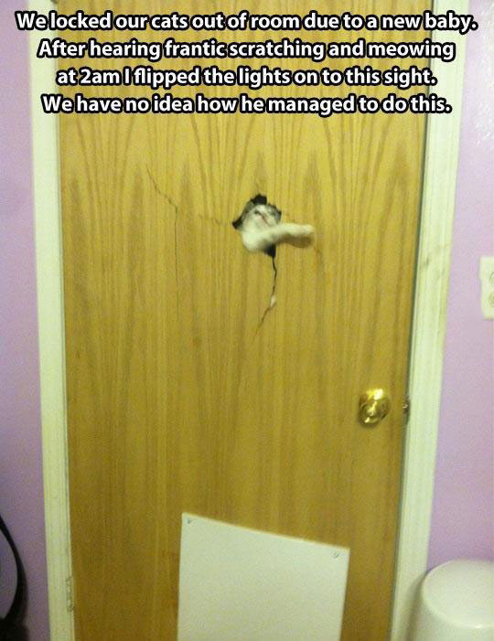 cool-trapped-cat-inside-door-broken