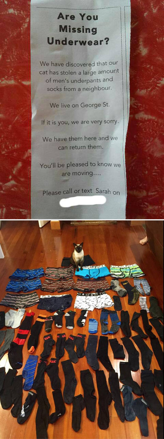 funny-cat-thief-clothes