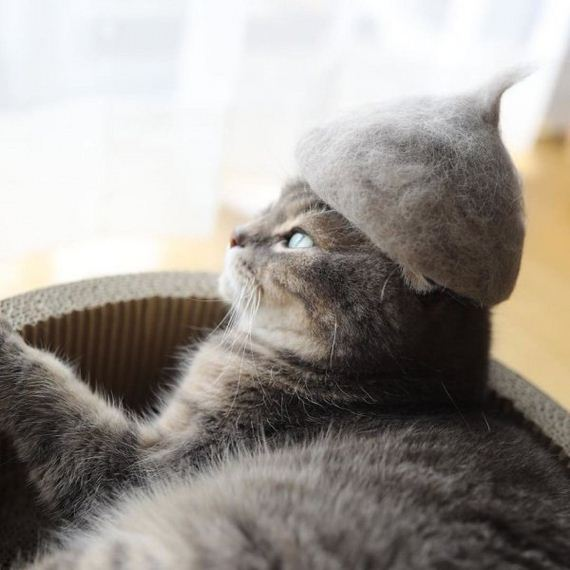 01-cats-in-hats-hair-from-own-backs