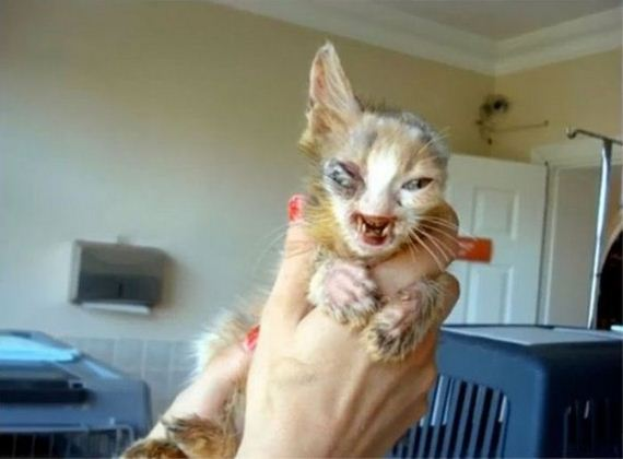 01-girl_saves_disfigured_cat