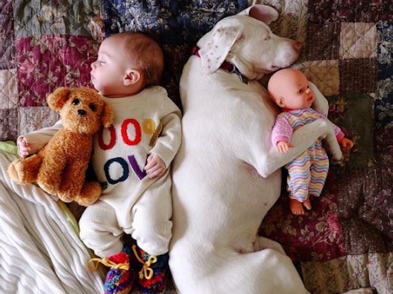 01-tiny-human-dogs