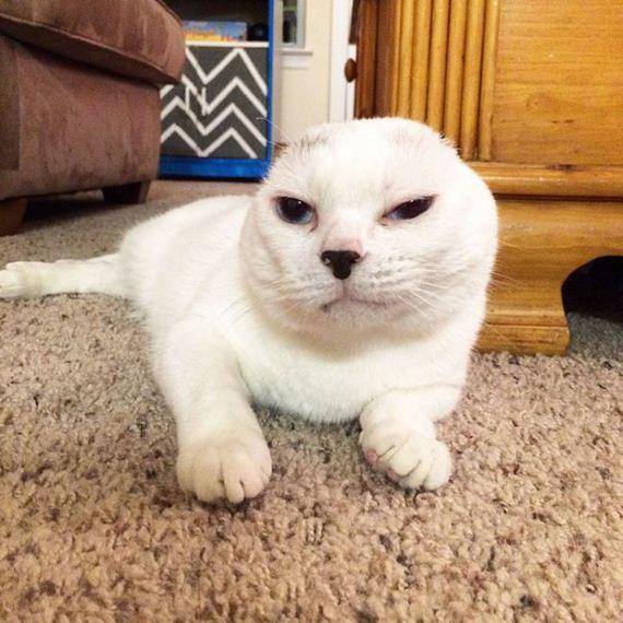 02-adopts_cat