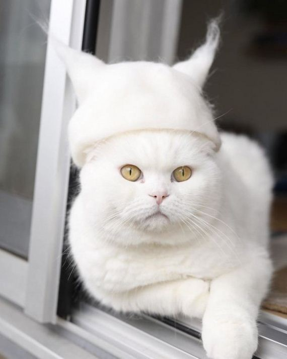 02-cats-in-hats-hair-from-own-backs