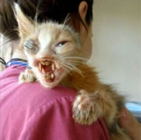 02-girl_saves_disfigured_cat