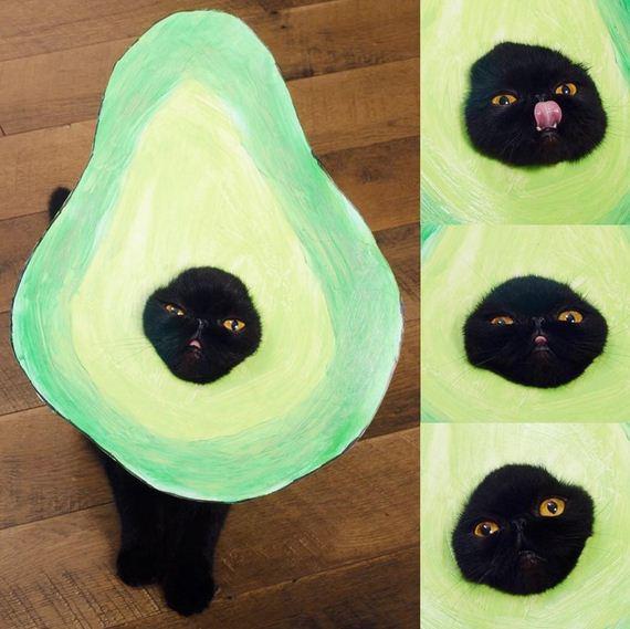 03-cat-costumes