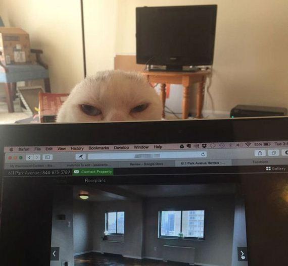 03-adopts_cat
