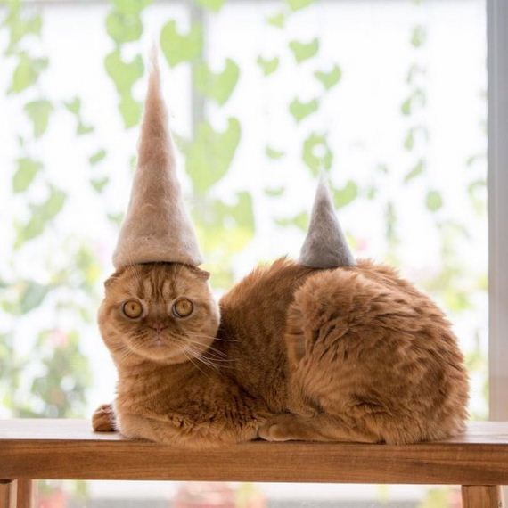 03-cats-in-hats-hair-from-own-backs
