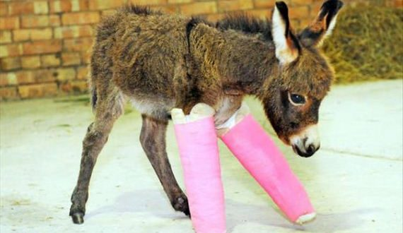 03-cute-animals-in-casts