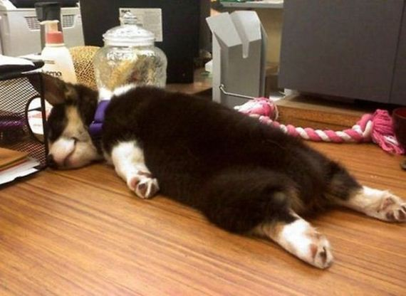 03-sleeping_pets