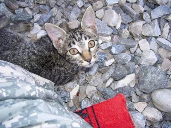 03-soldier-saves-cat-from-afghanistan